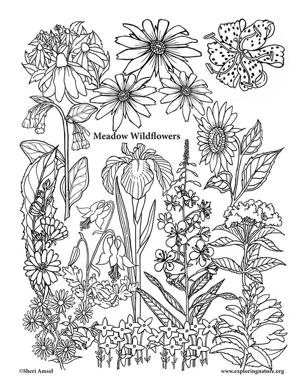 Meadow Wildflowers Coloring Page