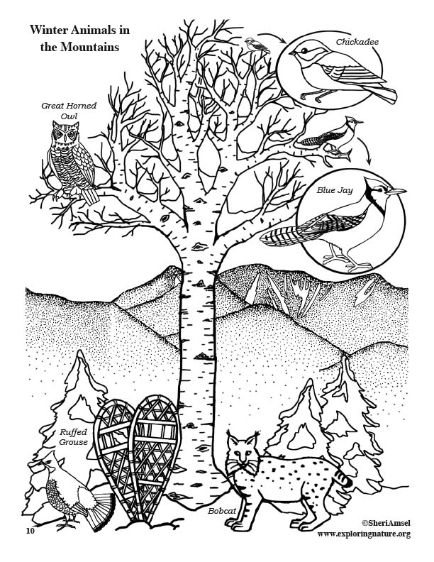 Winter Animals in the Mountains - Coloring Page