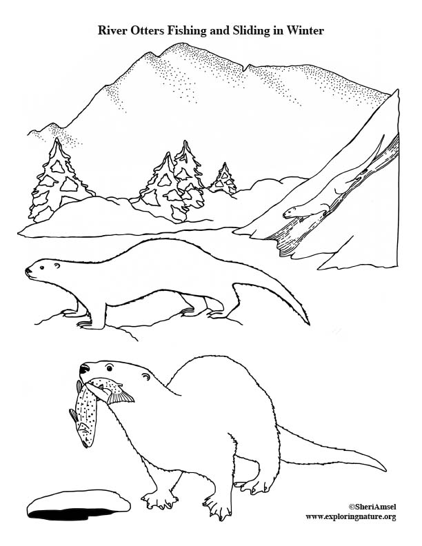 River Otters Fishing and Sliding in Winter Coloring Page