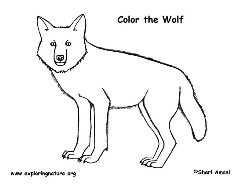 Wolf Coloring Page Exploring Nature Educational Resource And The Wolf Coloring Page3s