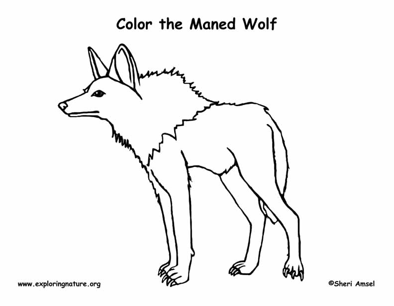 Wolf (Maned) Coloring Page