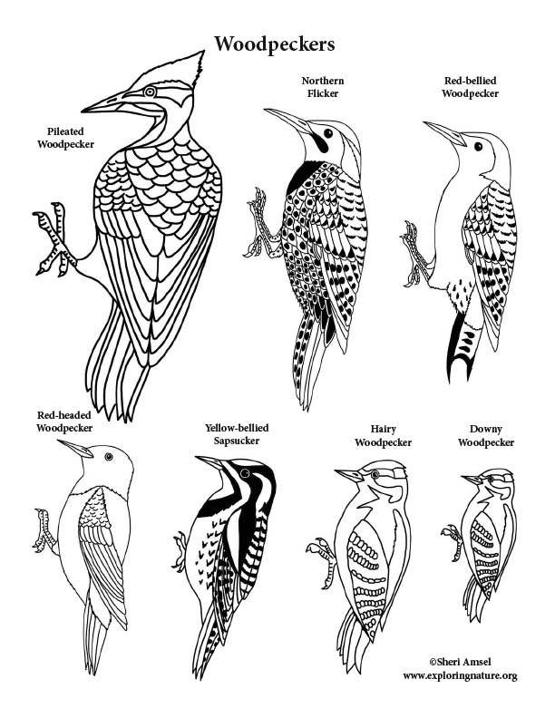Woodpeckers Coloring Page