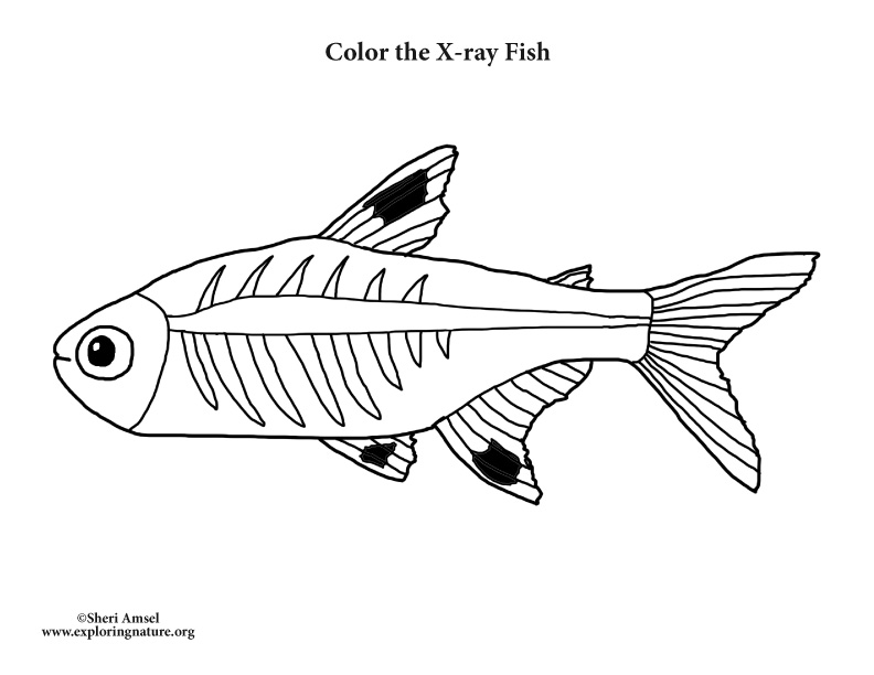 X Ray Fish Coloring