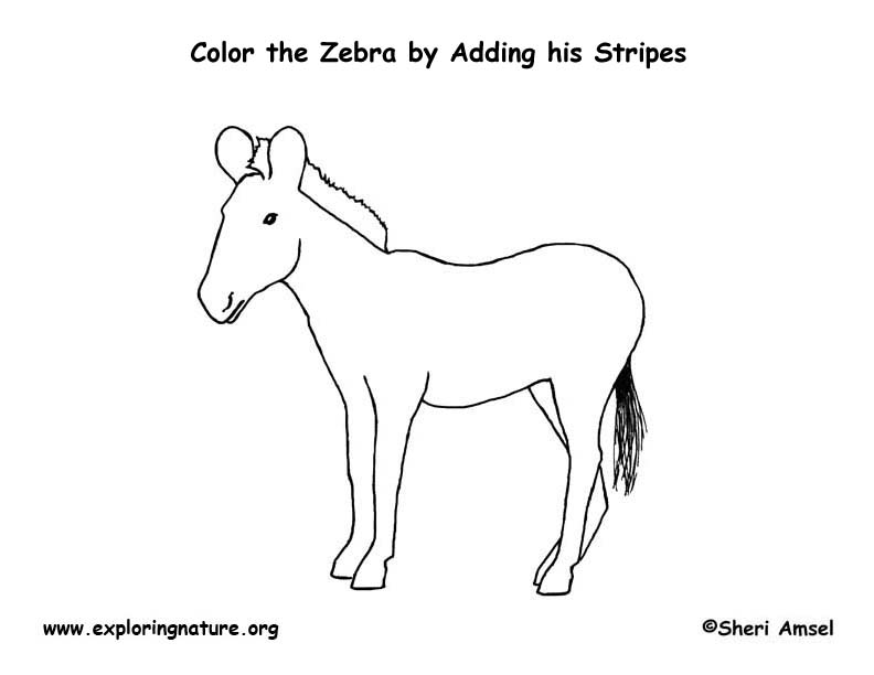 Zebra coloring page for Coloring pages of zebra stripes