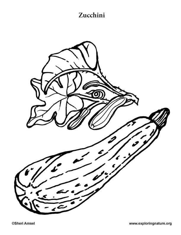 Garden Vegetables Coloring Pages