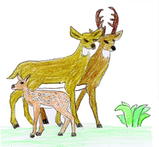 kids drawing animals - Animal Pictures For Kids To Draw