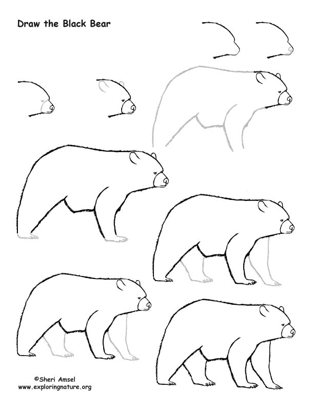Bear (Black) Drawing Lesson