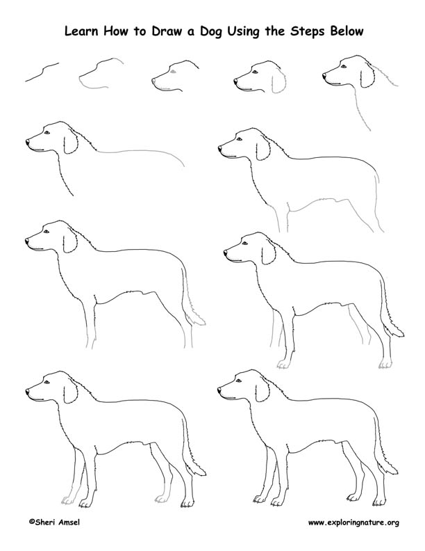Dog Drawing Lesson