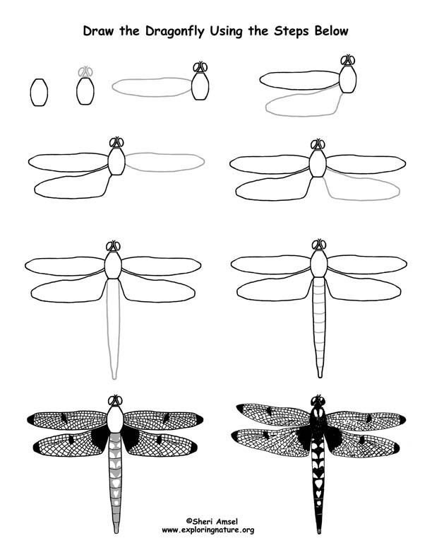 Dragonfly Drawing Lesson (Older Students)