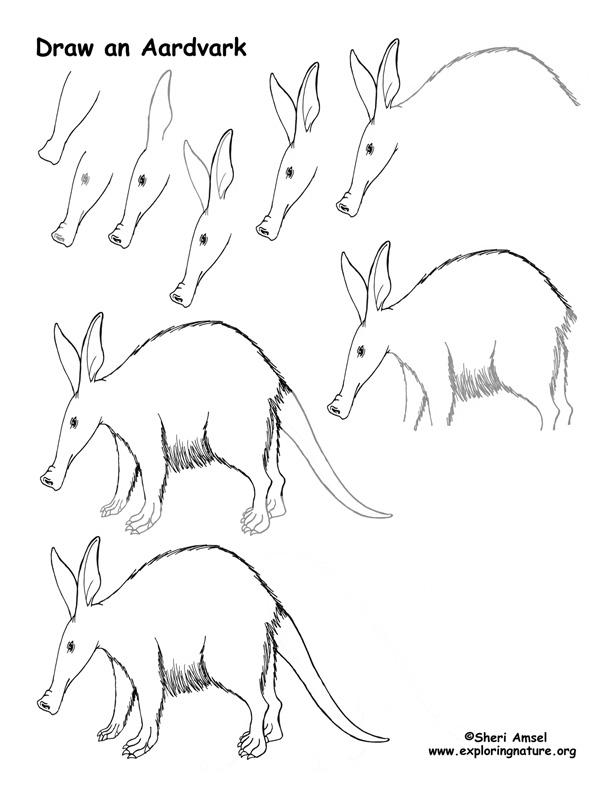 Aardvark Drawing Lesson