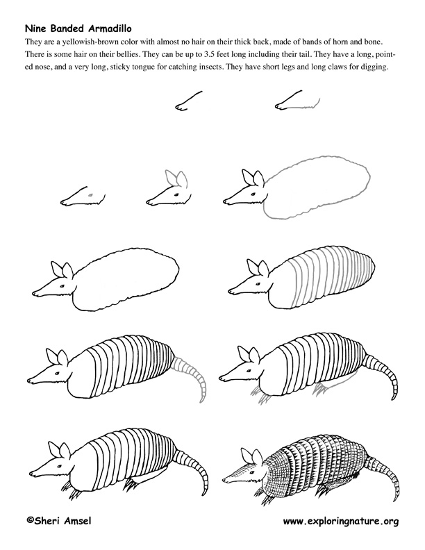 armadillo research paper This article was published october 27, 2013 at 12:00 am  scientists are using  armadillos as living test tubes for the study of leprosy, a disfiguring and.
