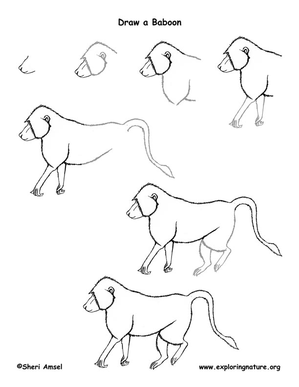 Baboon Drawing Lesson