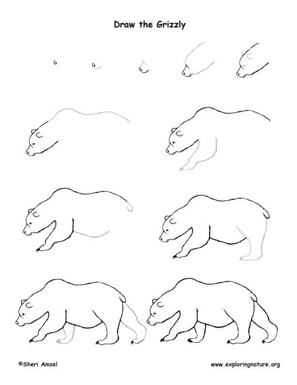 bear grizzly drawing lesson