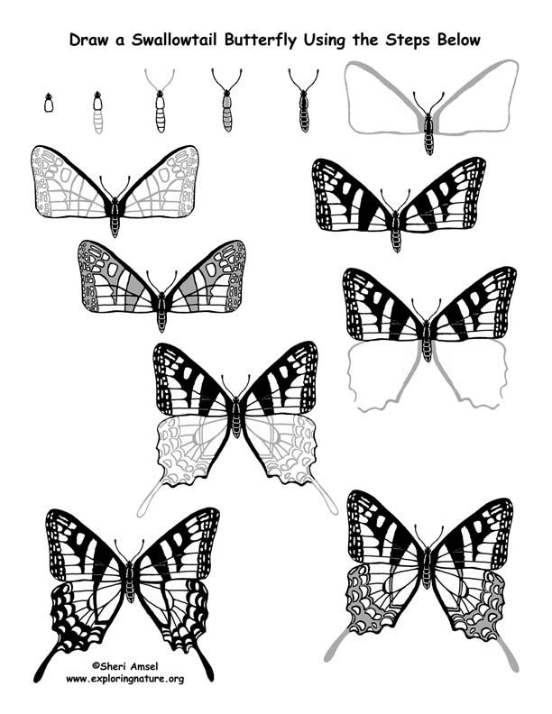 Butterfly (Swallowtail) Drawing Lesson (Older Students)