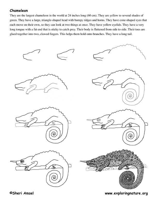 Chameleon drawing - photo#8