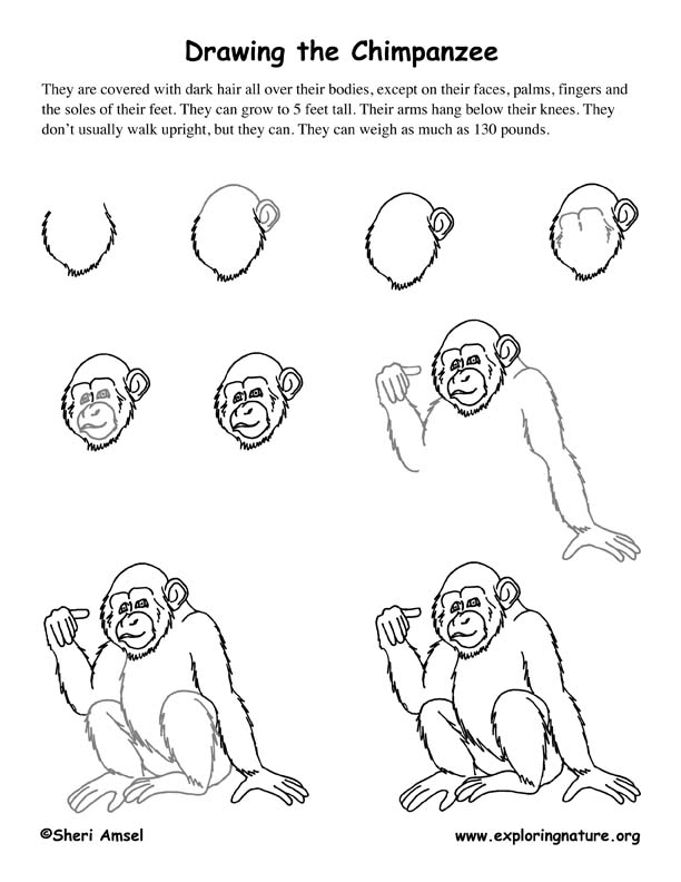 Chimpanzee Drawing Lesson Images - Frompo