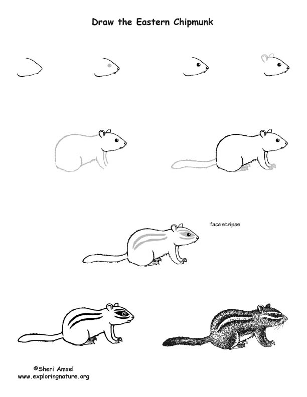 Chipmunk (Eastern) Drawing Lesson
