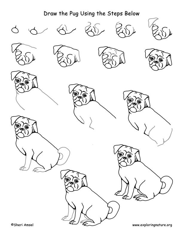 Pug Drawing Lesson