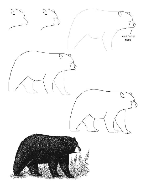Black bear sketches - photo#9