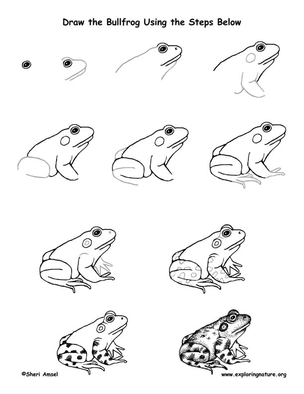 Bullfrog Drawing Lesson
