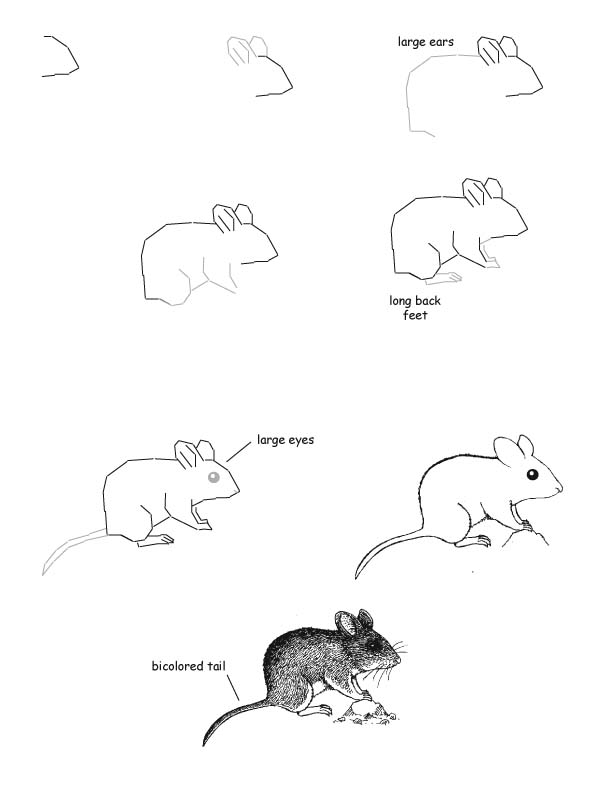 how to draw with a mouse