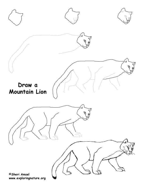 Mountain Lion Drawing Lesson