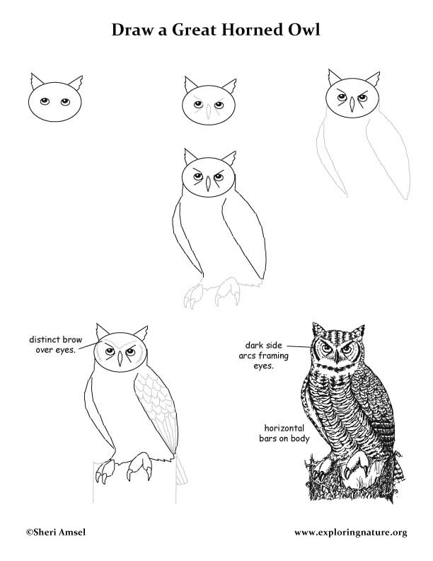 How to draw an owl step by step easy for Draw the owl