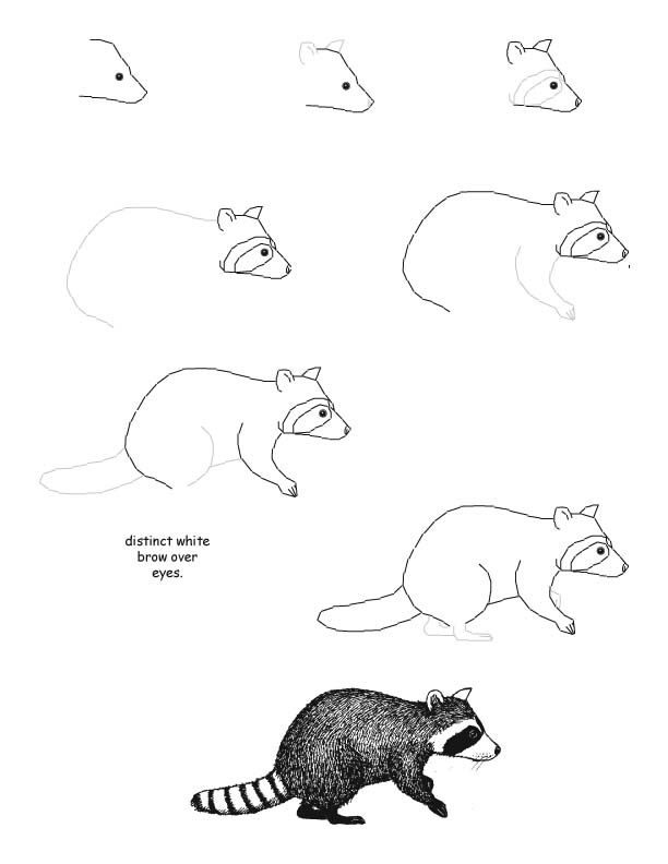How to draw a raccoon step-by-step (kids, art) | ציורים של ... Raccoon Drawing Easy
