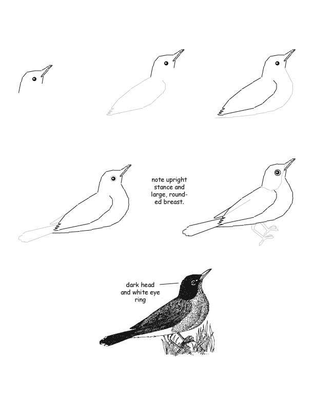 Robin Drawing Lesson