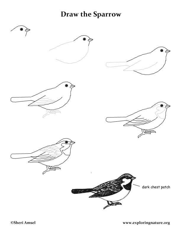 Simple sparrow drawings - photo#20
