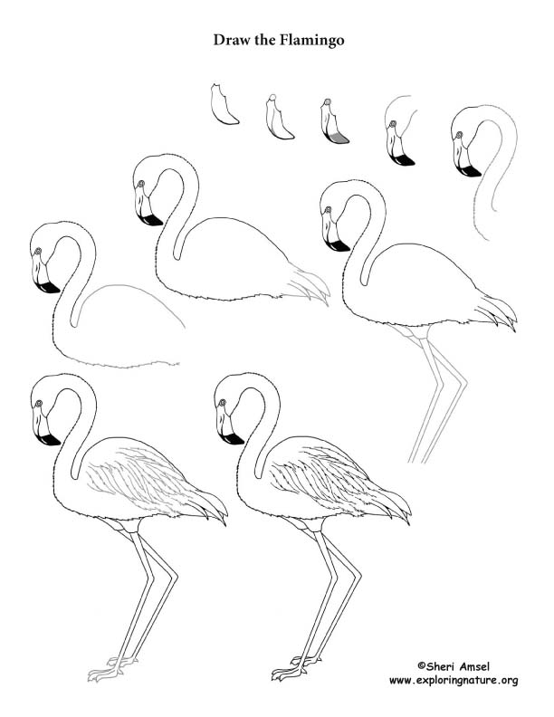 Flamingo Drawing Lesson