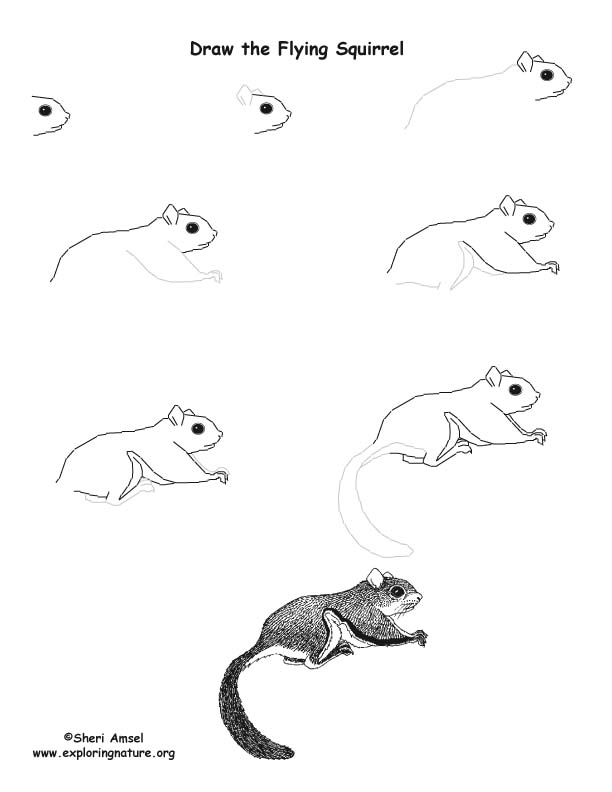 Squirrel Flying Drawing Lesson