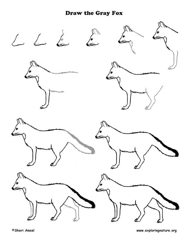 Fox Gray Drawing Lesson