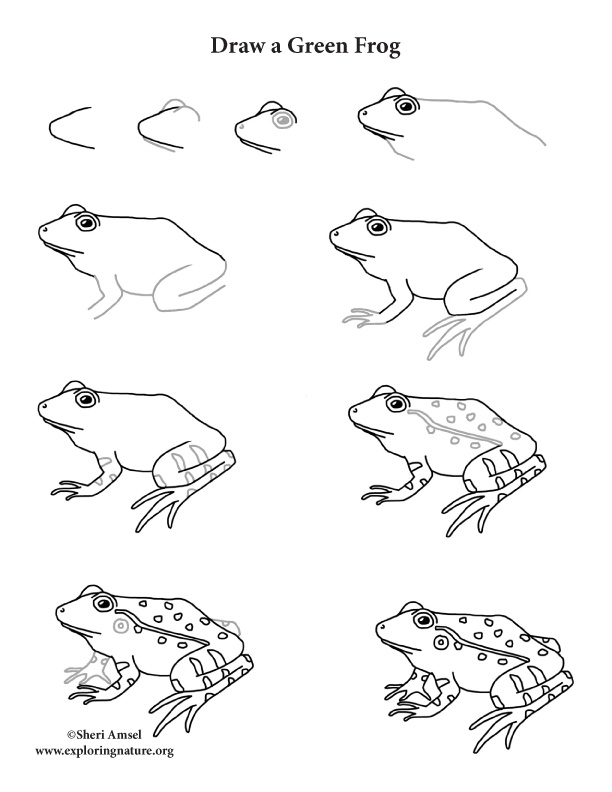 Frog (Green) Drawing Lesson, draw a green frog, draw a frog