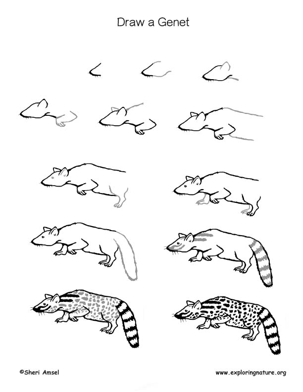 Genet Drawing Page