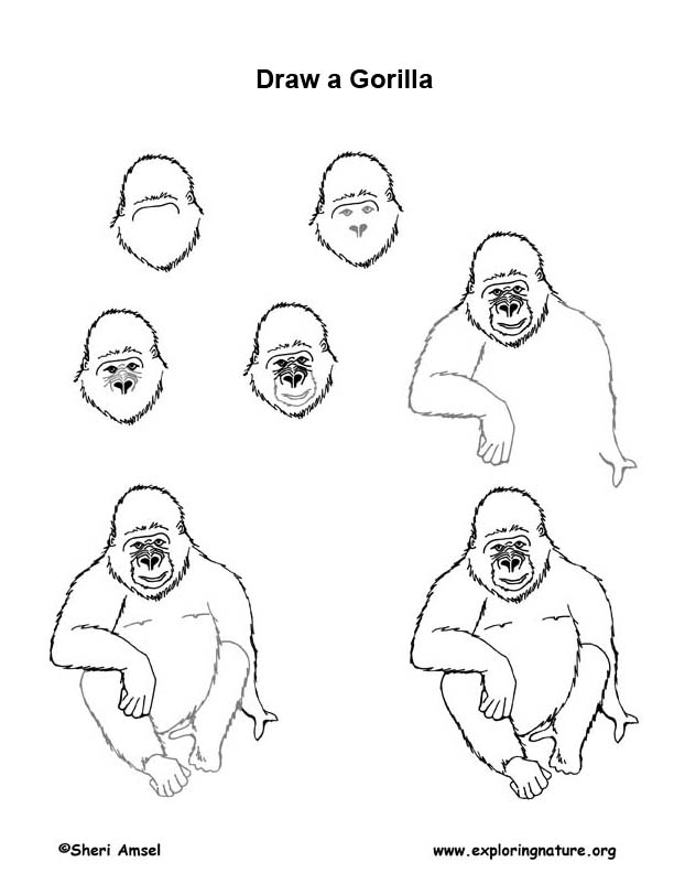 Gorilla Drawing Lesson
