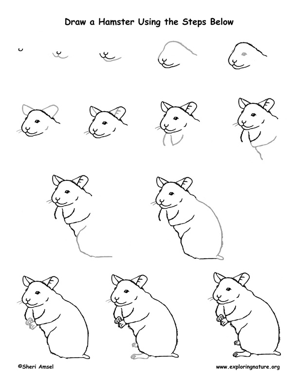 hamster drawing lesson