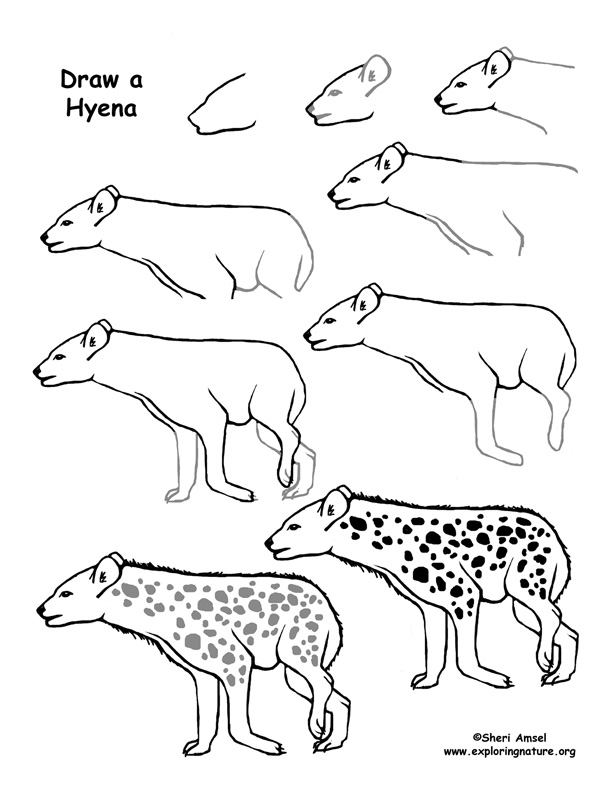 Hyena Drawing Page