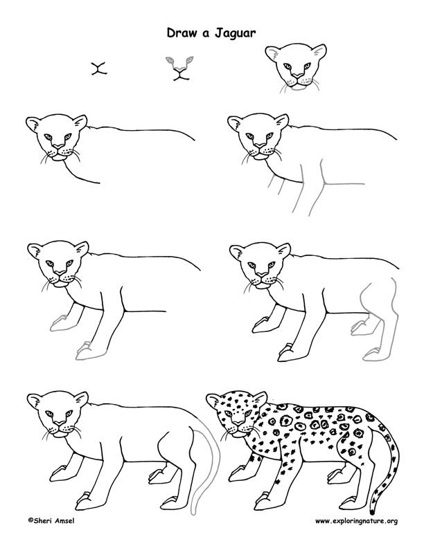 jaguar drawing step by step - photo #1