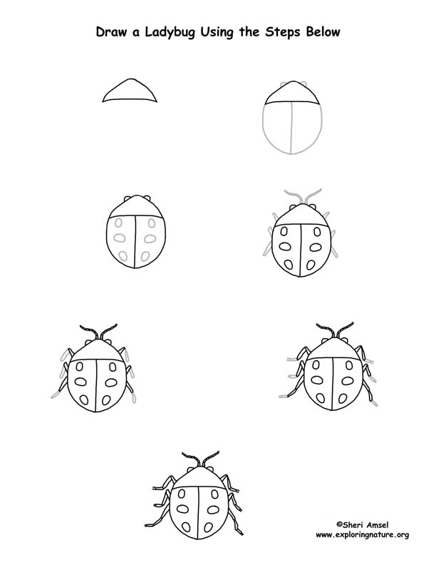 Ladybug Drawing Page (Older Students)