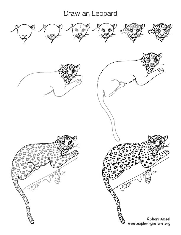 Leopard Drawing Lesson