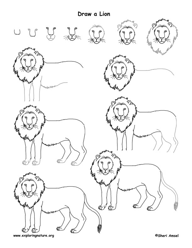 Lion Drawing page