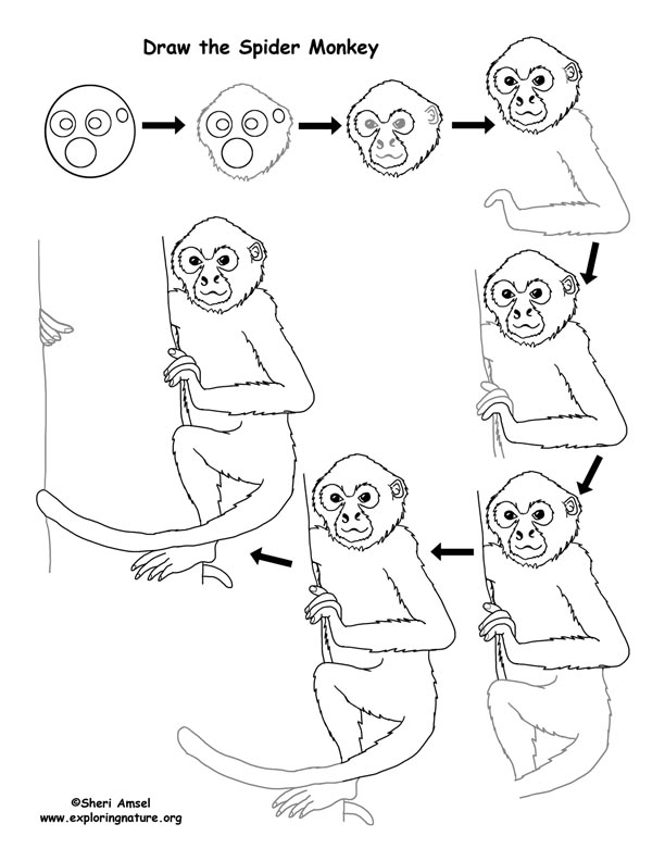 Image result for how to draw a spider monkey