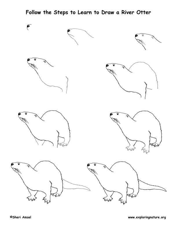 Otter Drawing Otter dr...