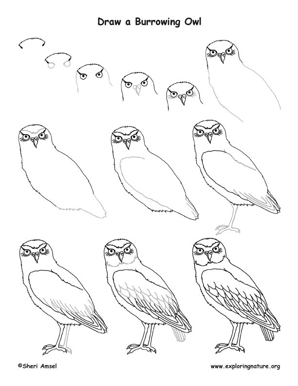Owl Burrowing Drawing Lesson