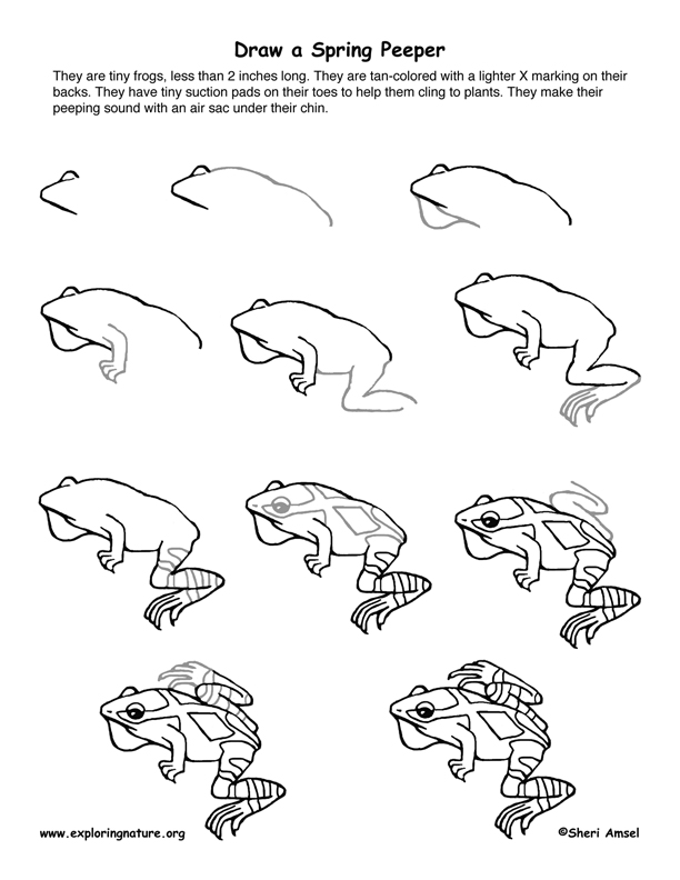 Spring Peeper Drawing Lesson