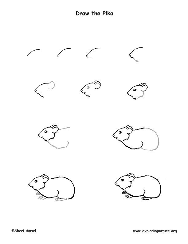 Pika Drawing Lesson