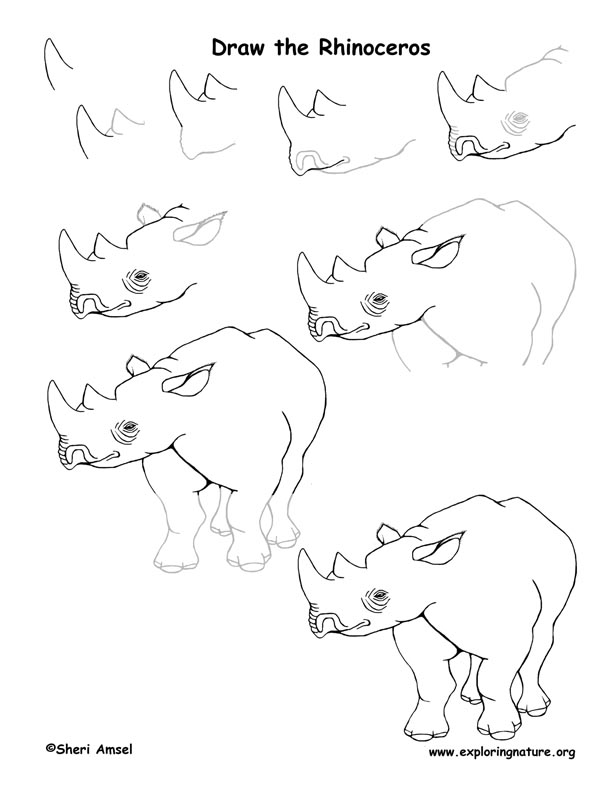 Rhinoceros Drawing Lesson