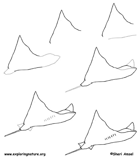 Gallery For gt Stingray Drawing