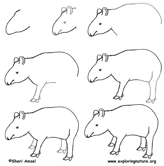Draw an amazon rainforest for Tapir coloring page